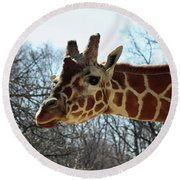 Giraffe Stretching For A View Round Beach Towel