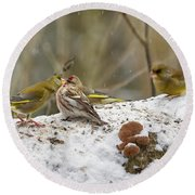 Give Me A Kiss. Redpolls And Greenfinches Round Beach Towel