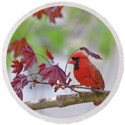 Give Me Shelter - Male Cardinal Round Beach Towel by Kerri Farley