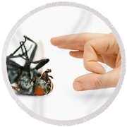 Give Pests The Flick Round Beach Towel
