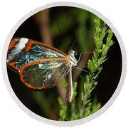 Glasswinged Butterfly Round Beach Towel