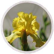 Glowing Yellow Iris Round Beach Towel