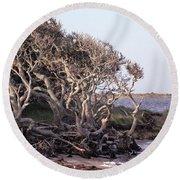 Gnarled Oak Trees Round Beach Towel