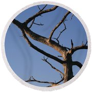 Gnarly Tree Round Beach Towel