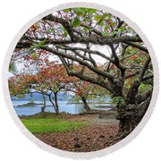 Gnarly Trees Of South Hilo Bay - Hawaii Round Beach Towel