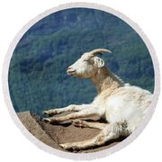 Goat Enjoy The Sun Round Beach Towel