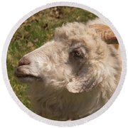Goat Looking Up. Round Beach Towel