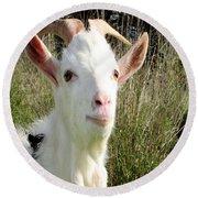 Goat Portrait Round Beach Towel