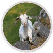 Goat Posing Round Beach Towel