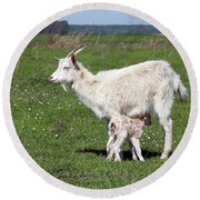 Goat With Just Born Little Goat Spring Scene Round Beach Towel
