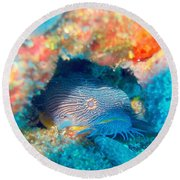 Goatfish Round Beach Towel