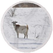 Goats In Snow Round Beach Towel