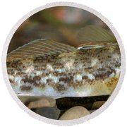 Goby Fish Round Beach Towel