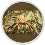 Gold Hunting Spider Round Beach Towel