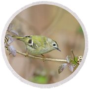 Goldcrest Round Beach Towel