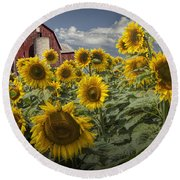 Golden Blooming Sunflowers With Red Barn Round Beach Towel