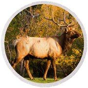 Golden Bull Elk Portrait Round Beach Towel