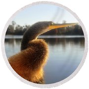 Golden Crested Anhinga Round Beach Towel