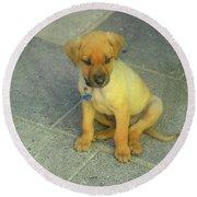 Golden Cunucu Puppy In Aruba Round Beach Towel