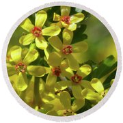Golden Currant Blossoms Round Beach Towel
