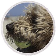 Golden Doodle And His Ball Round Beach Towel