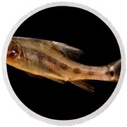 Golden Line Barbel Round Beach Towel