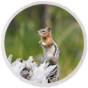 Golden Mantled Ground Squirrel Round Beach Towel