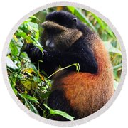Golden Monkey II Round Beach Towel