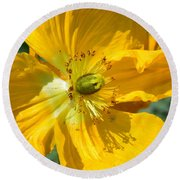 Golden Poppy Expose Round Beach Towel