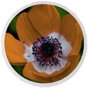 Golden Poppy Round Beach Towel