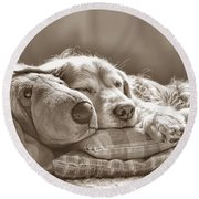Golden Retriever Dog Sleeping With My Friend Sepia Round Beach Towel