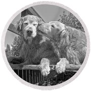 Golden Retrievers The Kiss Black And White Round Beach Towel