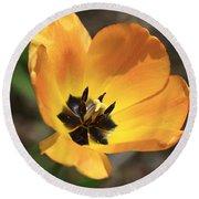 Golden Tulip Petals Round Beach Towel