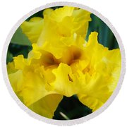 Golden Yellow Iris Flower Garden Irises Flora Art Prints Baslee Troutman Round Beach Towel