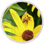 Goldenrod Soldier Beetle Round Beach Towel