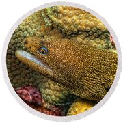 Goldentail Moray Round Beach Towel