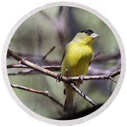 Goldfinch 042914a Round Beach Towel