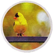 Goldfinch Sitting Pretty Round Beach Towel