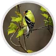 Goldfinch Suspended In Song Round Beach Towel
