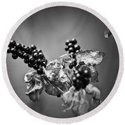 Gone To Seed Blackberry Lily Round Beach Towel