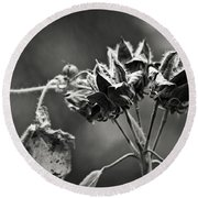 Gone To Seed Hibiscus Round Beach Towel