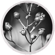 Gone To Seed Rose Hips Round Beach Towel