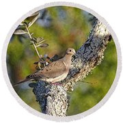 Good Mourning Dove By H H Photography Of Florida Round Beach Towel