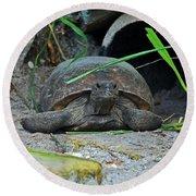 Gopher Tortoise II Round Beach Towel