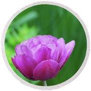 Gorgeous Blooming And Flowering Dark Pink Parrot Tulip Round Beach Towel