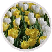Gorgeous Blooming Field Of White And Yellow Tulips Round Beach Towel