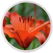 Gorgeous Blooming Orange Lily Flowering In A Garden Round Beach Towel