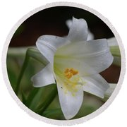 Gorgeous Blooming White Lily With Yellow Pollen On It's Stamen Round Beach Towel