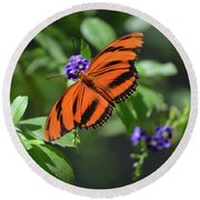 Gorgeous Close Up Of An Oak Tiger Butterfly In Nature Round Beach Towel