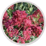 Gorgeous Cluster Of Red Phlox Flowers In A Garden Round Beach Towel
